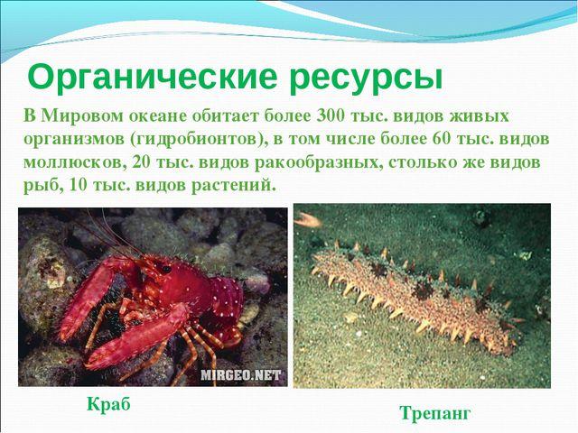 Органические ресурсы Краб Трепанг В Мировом океане обитает более 300 тыс. вид...