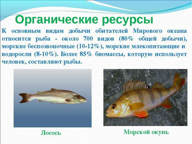 Лосось Морской окунь К основным видам добычи обитателей Мирового океана относ...