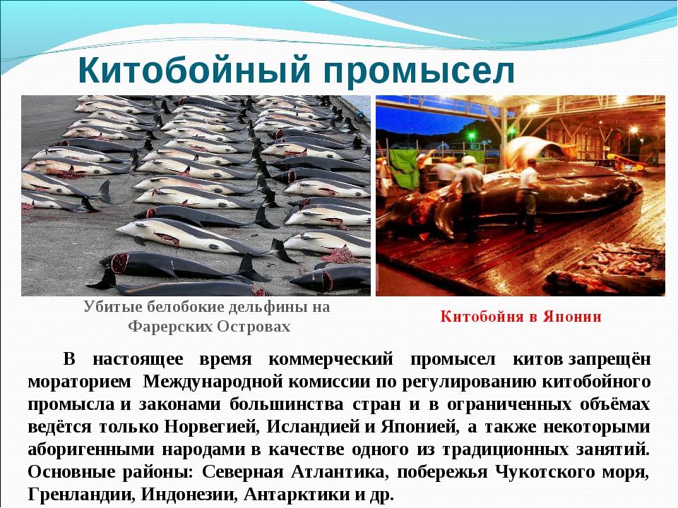 Китобойный промысел В настоящее время коммерческий промысел китовзапрещён мо...