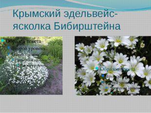 Крымский эдельвейс- ясколка Бибирштейна