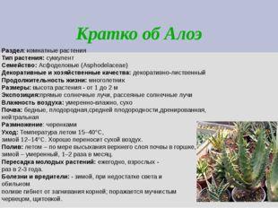 Кратко об Алоэ Раздел: комнатные растения Тип растения: суккулент Семейство: