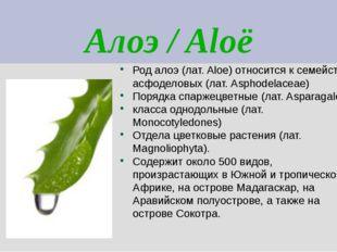 Алоэ / Aloë Род алоэ (лат. Aloe) относится к семейству асфоделовых (лат. Asph