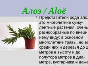 Алоэ / Aloë Представители рода алоэ – это многолетние сукку- лентные растения