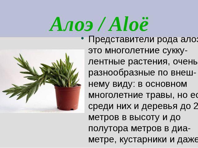 Алоэ / Aloë Представители рода алоэ – это многолетние сукку- лентные растения...