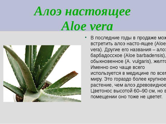 Алоэ настоящее Aloe vera В последние годы в продаже можно встретить алоэ наст...