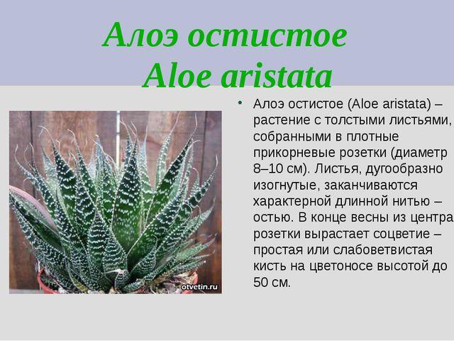 Алоэ остистое Aloe aristata Алоэ остистое (Aloe aristata) – растение с толсты...