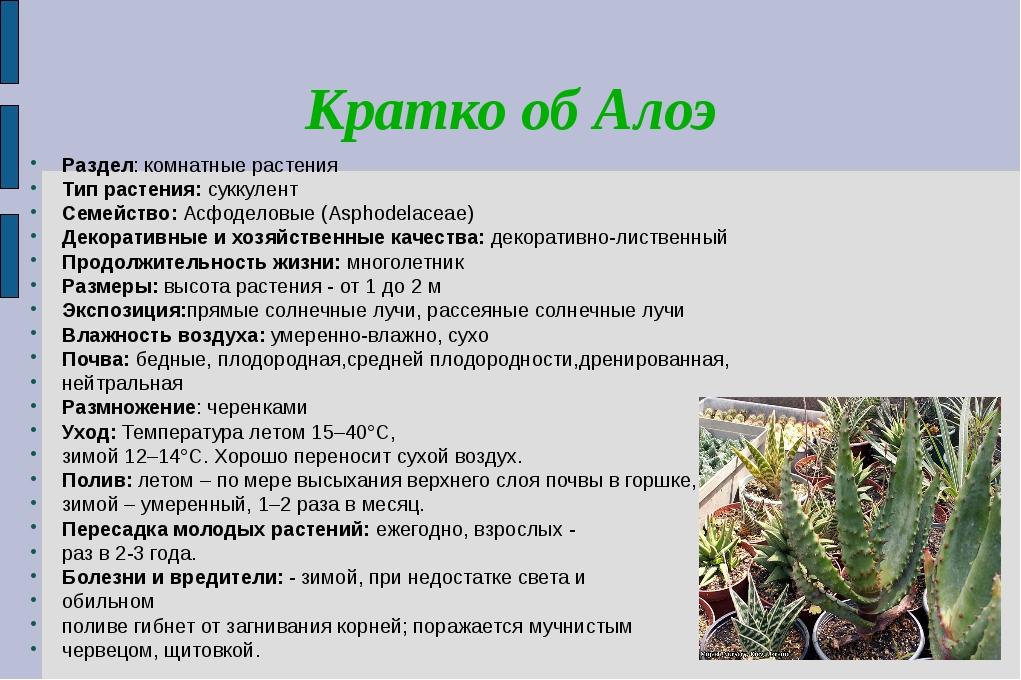 Кратко об Алоэ Раздел: комнатные растения Тип растения: суккулент Семейство:...