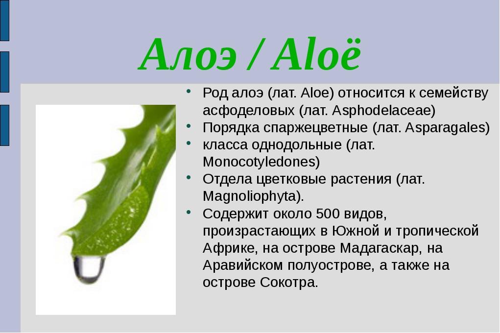 Алоэ / Aloë Род алоэ (лат. Aloe) относится к семейству асфоделовых (лат. Asph...