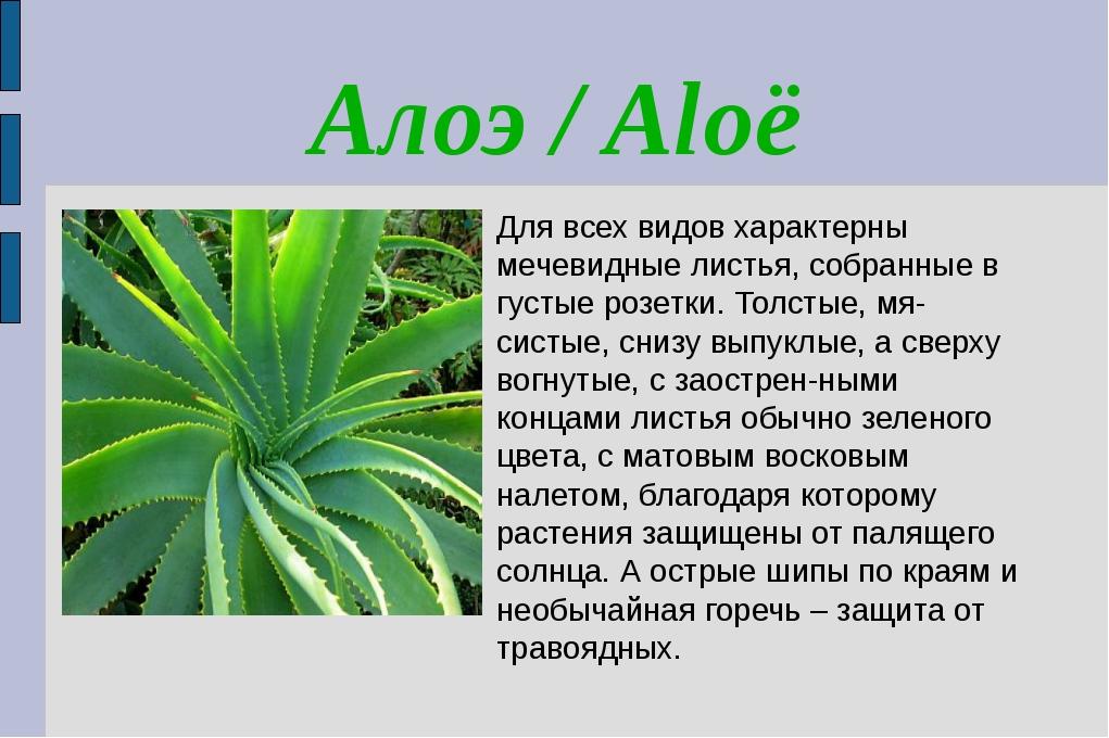 Алоэ / Aloë Для всех видов характерны мечевидные листья, собранные в густые р...
