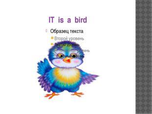 IT is a bird