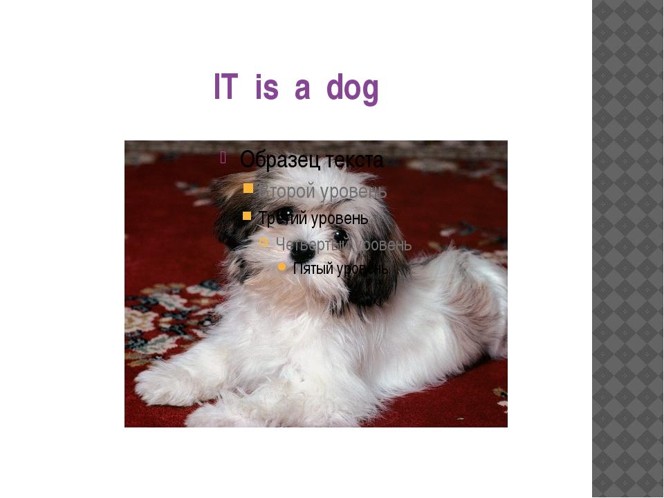 IT is a dog