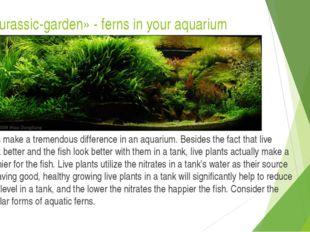 Mini «Jurassic-garden» - ferns in your aquarium Live plants make a tremendous