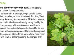 Pteridaceae. Ceratopteris pteridoides (Hooker, 1905). Ceratopteris pteridoide