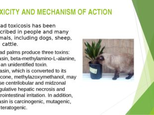 TOXICITY AND MECHANISM OF ACTION Cycad toxicosis has been described in people