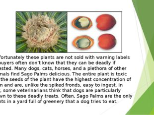 Unfortunately these plants are not sold with warning labels so buyers often