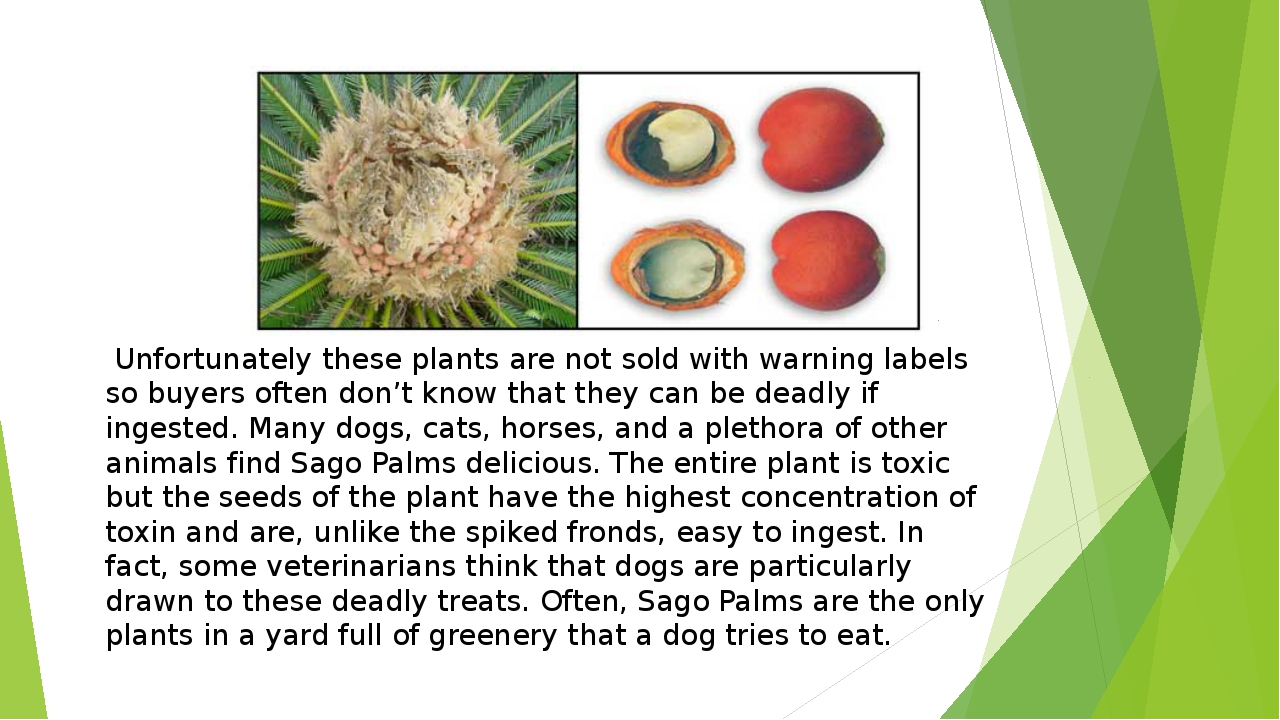 Unfortunately these plants are not sold with warning labels so buyers often...