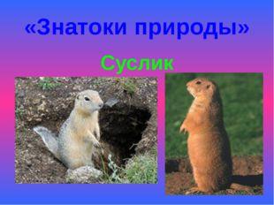 «Знатоки природы» Суслик