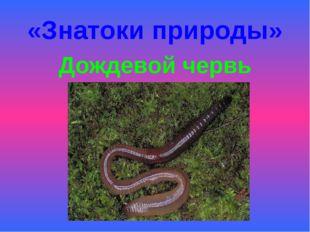 «Знатоки природы» Дождевой червь