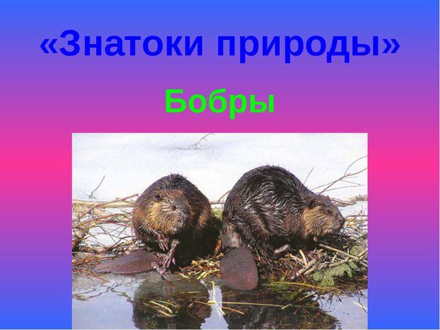 «Знатоки природы» Бобры