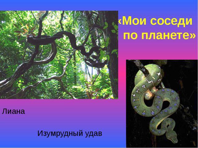 «Мои соседи по планете» Лиана Изумрудный удав