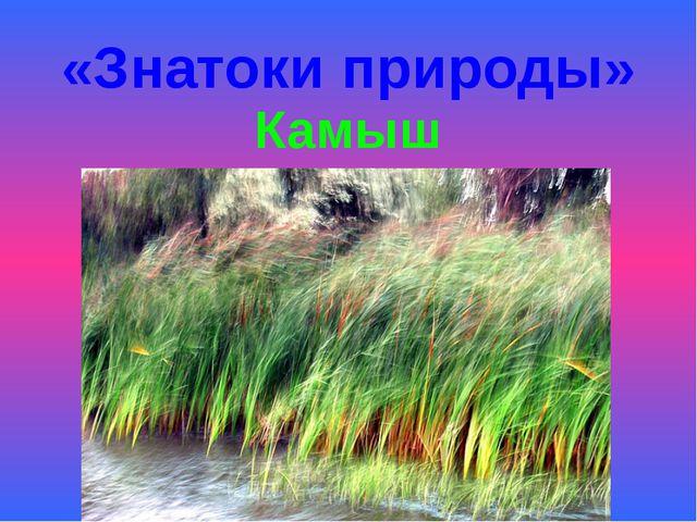 «Знатоки природы» Камыш