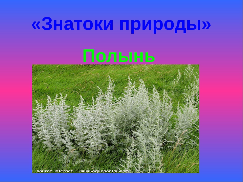 «Знатоки природы» Полынь