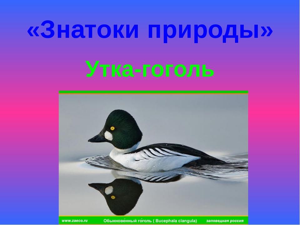«Знатоки природы» Утка-гоголь