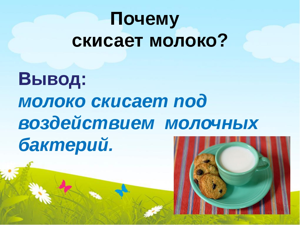 Почему скисает молоко? Вывод: молоко скисает под воздействием молочных бактер...