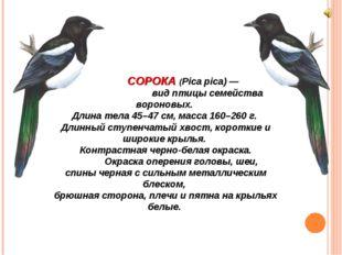 СОРОКА (Pica pica) — вид птицы семейства вороновых. Длина тела 45–47 см, мас