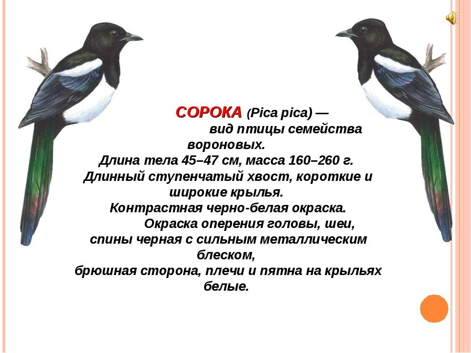 СОРОКА (Pica pica) — вид птицы семейства вороновых. Длина тела 45–47 см, мас...