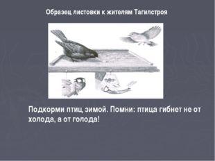 Образец листовки к жителям Тагилстроя Подкорми птиц зимой. Помни: птица гибне