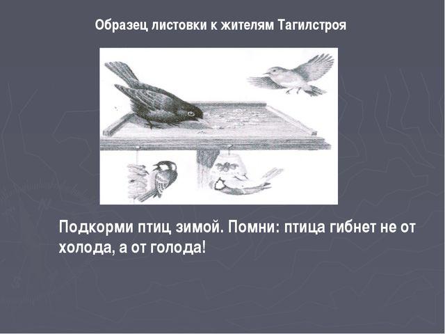 Образец листовки к жителям Тагилстроя Подкорми птиц зимой. Помни: птица гибне...