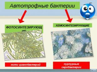 Автотрофные бактерии ФОТОСИНТЕЗИРУЮЩИЕ ХЕМОСИНТЕЗИРУЮЩИЕ пурпурные серобактер