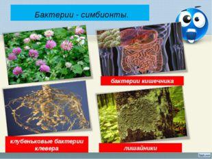 Бактерии - симбионты. лишайники бактерии кишечника клубеньковые бактерии кле