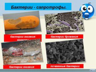 Бактерии - сапротрофы. бактерии гниения моркови бактерии гниения бактерии бр