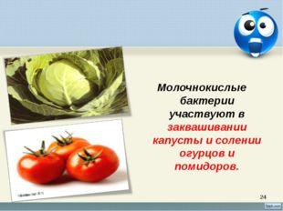 * Молочнокислые бактерии участвуют в заквашивании капусты и солении огурцов и