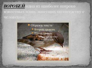 ВОРОБЕЙ одна из наиболее широко известных птиц, живущих по соседству с челове