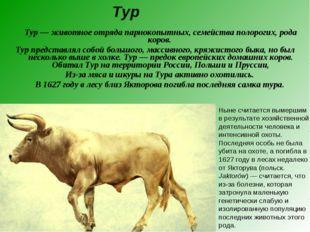 Тур — животное отряда парнокопытных, семейства полорогих, рода коров. Тур