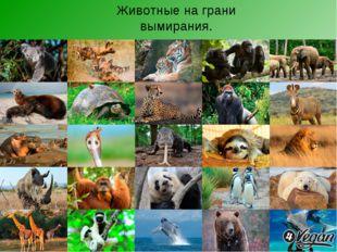 Животные на грани вымирания.