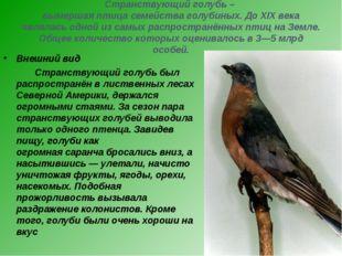 Странствующий голубь – вымершая птица семейства голубиных. До XIX века являла