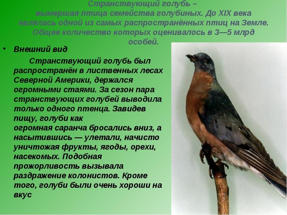 Странствующий голубь – вымершая птица семейства голубиных. До XIX века являла...
