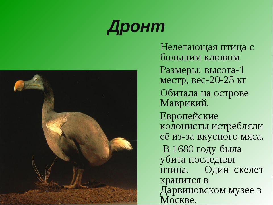Дронт Нелетающая птица с большим клювом Размеры: высота-1 местр, вес-20-25 к...