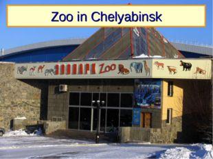Zoo in Chelyabinsk