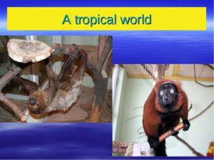 A tropical world