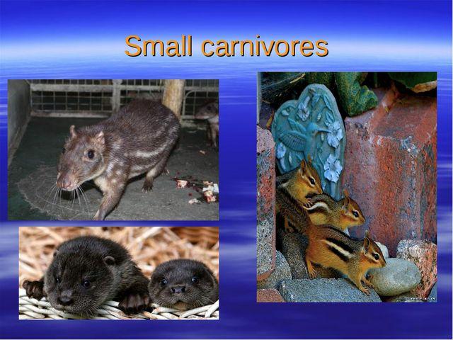 Small carnivores