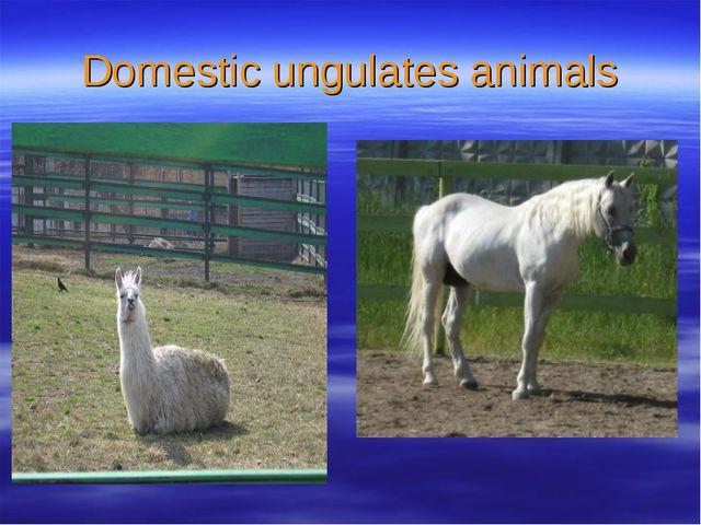 Domestic ungulates animals