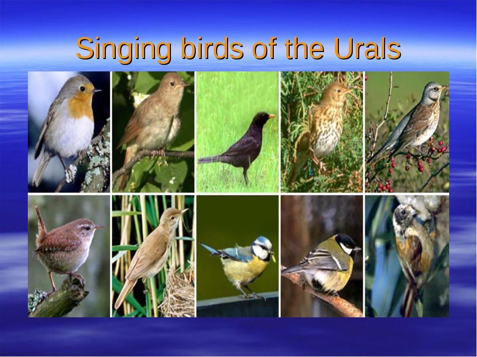 Singing birds of the Urals