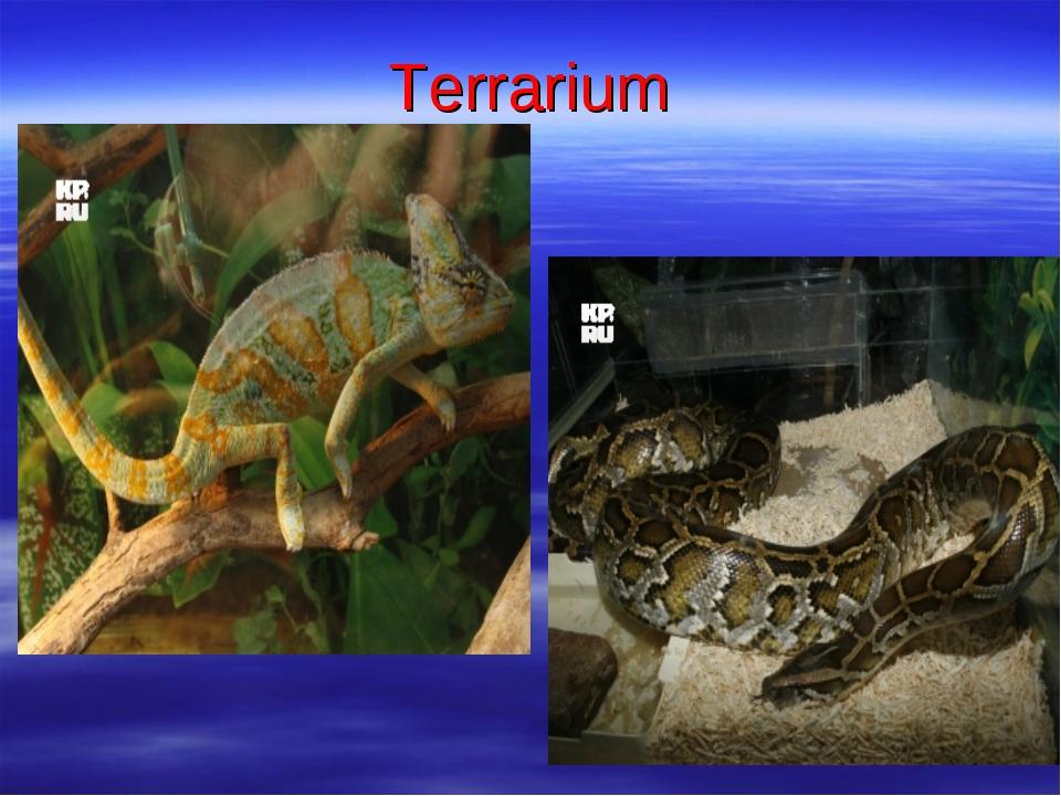 Тerrarium