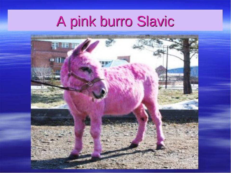 A pink burro Slavic