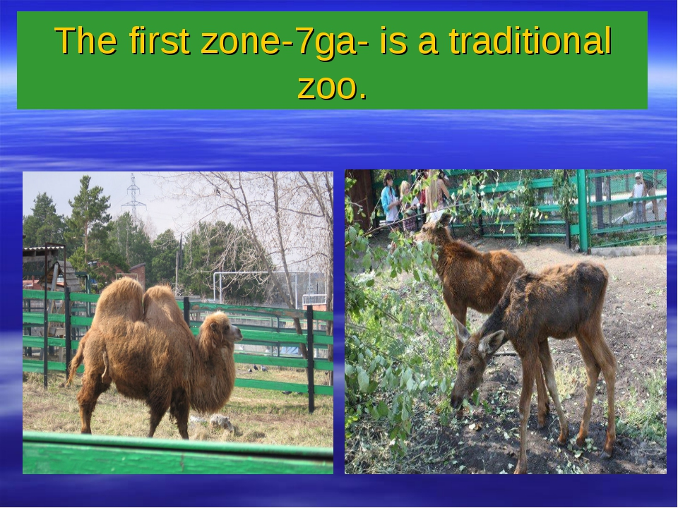 The first zone-7ga- is a traditional zoo.